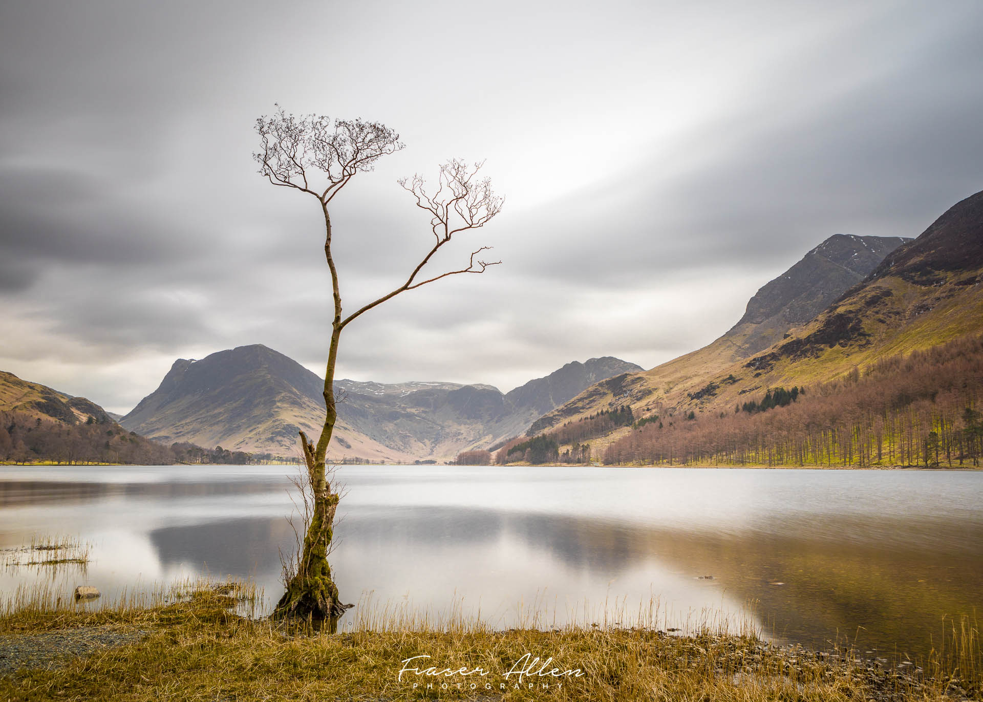 The Lone Tree at Buttermere